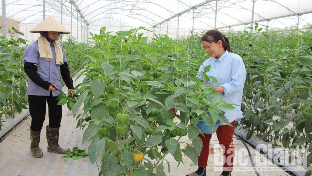 Outstanding progress of Bac Giang agriculture and rural area