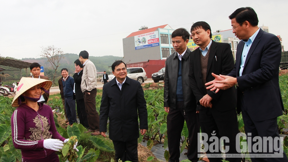 Bac Giang provincial Chairman, Duong Van Thai, Bac Giang province, farming models, high productivity and quality, food safety