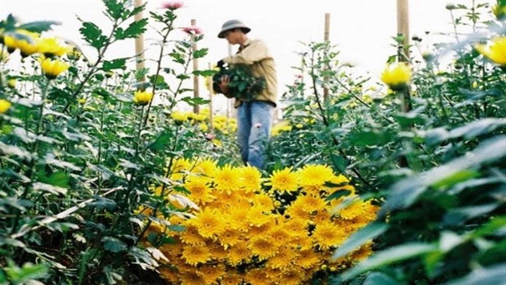 Fresh air, flowers, outside Hanoi, Me Linh Flower Village, flower field, new flower hub, immense flower fields