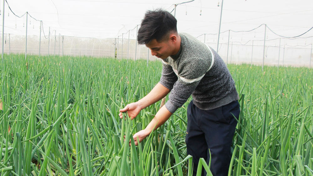 Bac Giang first ever exports bunching onion to Japan