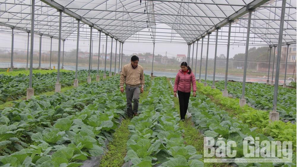 Mô hình trồng rau VietGAP tại xã Mai Trung (Hiệp Hòa).