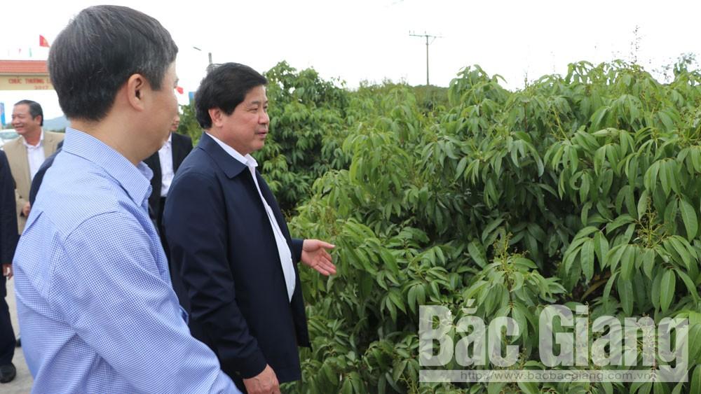 Thứ trưởng Bộ Nông nghiệp và PTNT Lê Quốc Doanh thăm vùng sản xuất vải thiều xuất khẩu tại Lục Ngạn