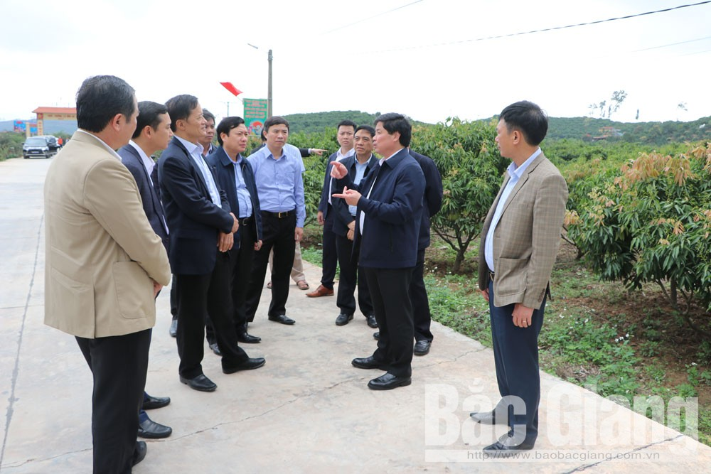 Bac Giang province, 50 hectares, lychee production, export to Japan, Luc Ngan lychee, Deputy Minister Le Quoc Doanh, VietGAP, GlobalGAP procedures