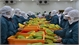 Veggie, fruit exporters seek new markets through EVFTA
