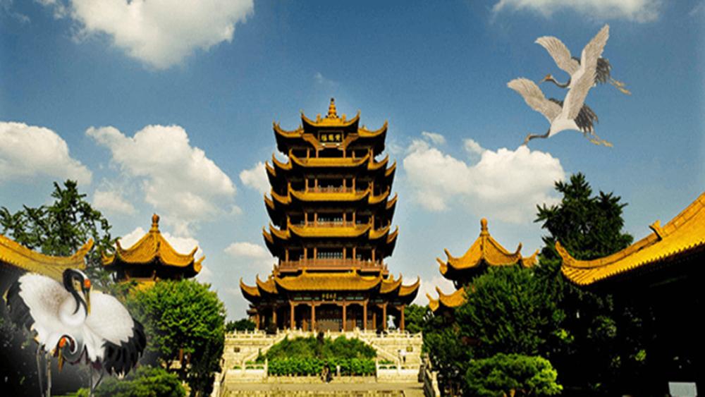dịch viêm phổi, Trung Quốc, viêm phổi, virus Corona, virus viêm phổi Vũ Hán COVID-19, nCoV