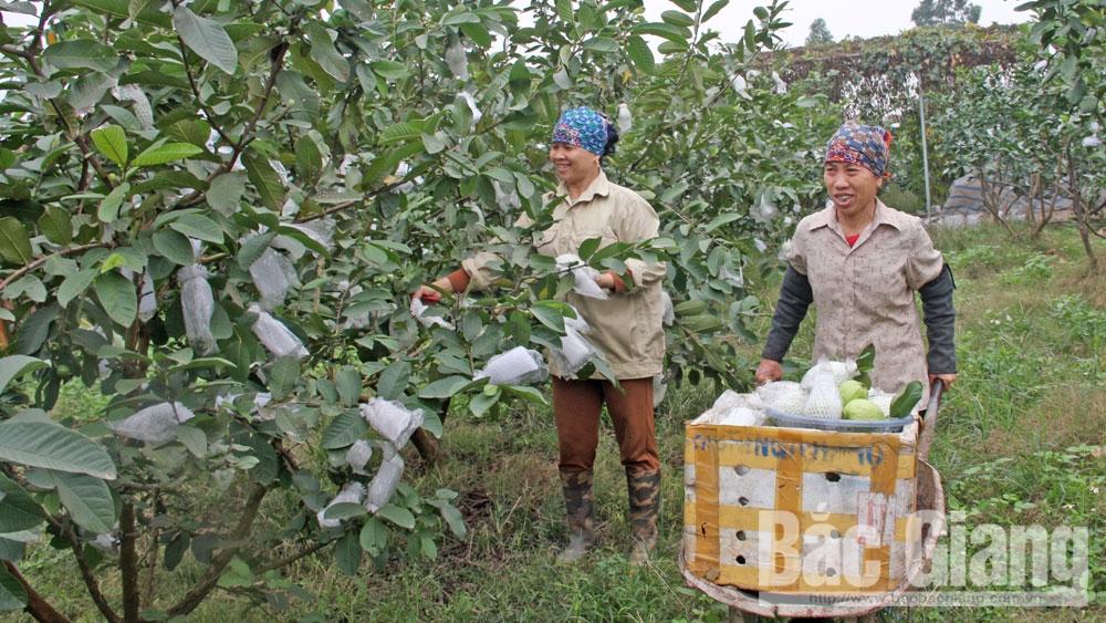 nông nghiệp, huyện Việt Yên, Bắc Giang