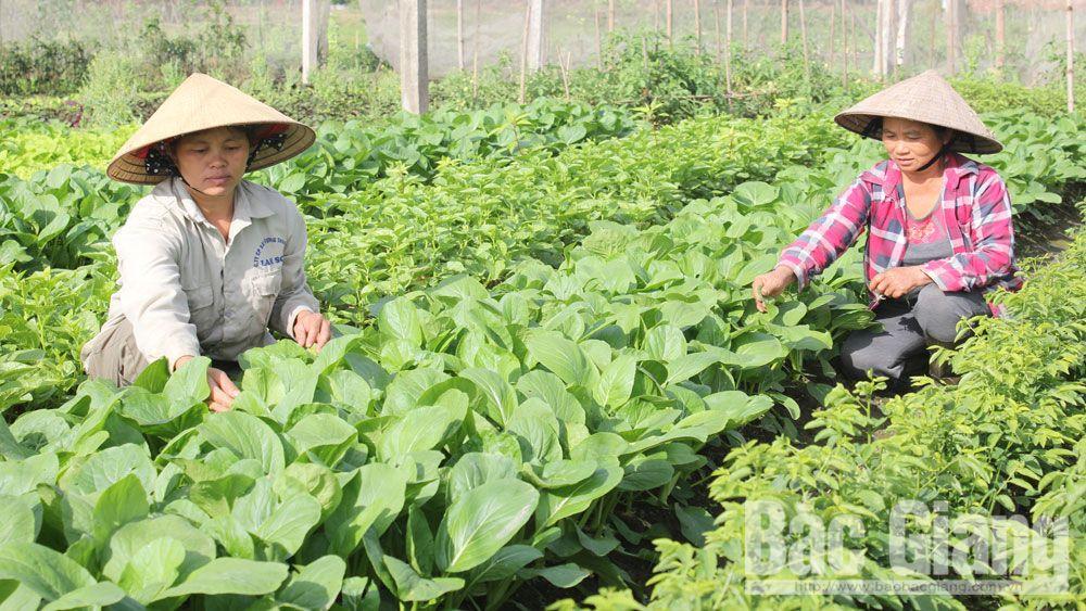 phụ nữ, Bắc Giang, khởi nghiệp, vệ sinh thực phẩm