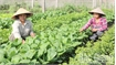 Safe agricultural products made by women