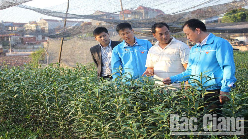 thanh niên, khởi nghiệp, Bắc Giang, giảm nghèo
