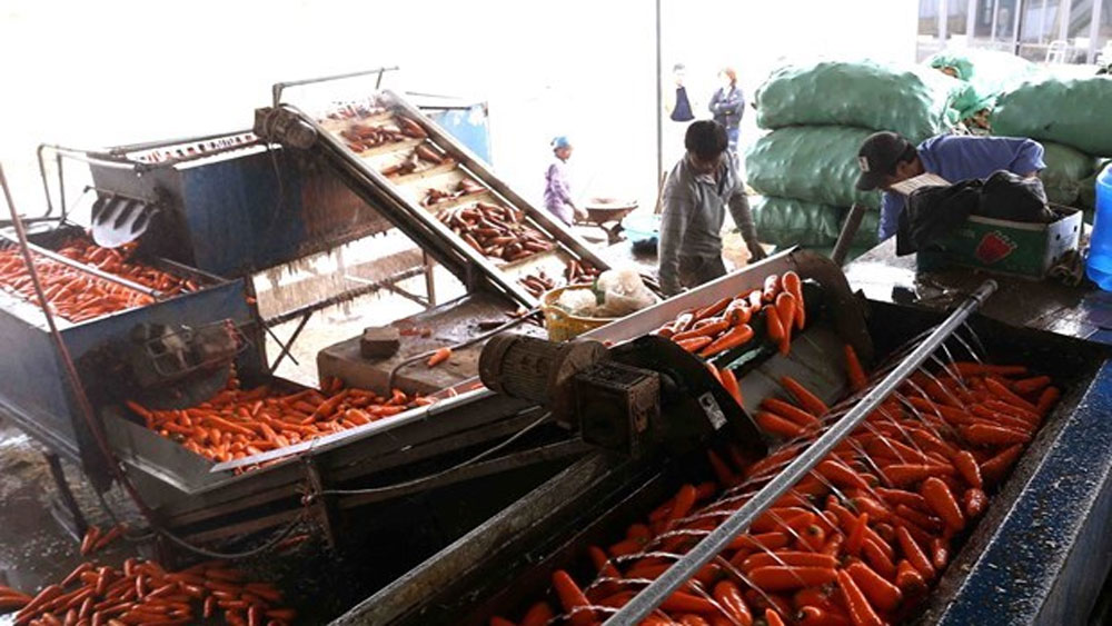 Vietnam eyes stronger cooperation, farm produce trade with US