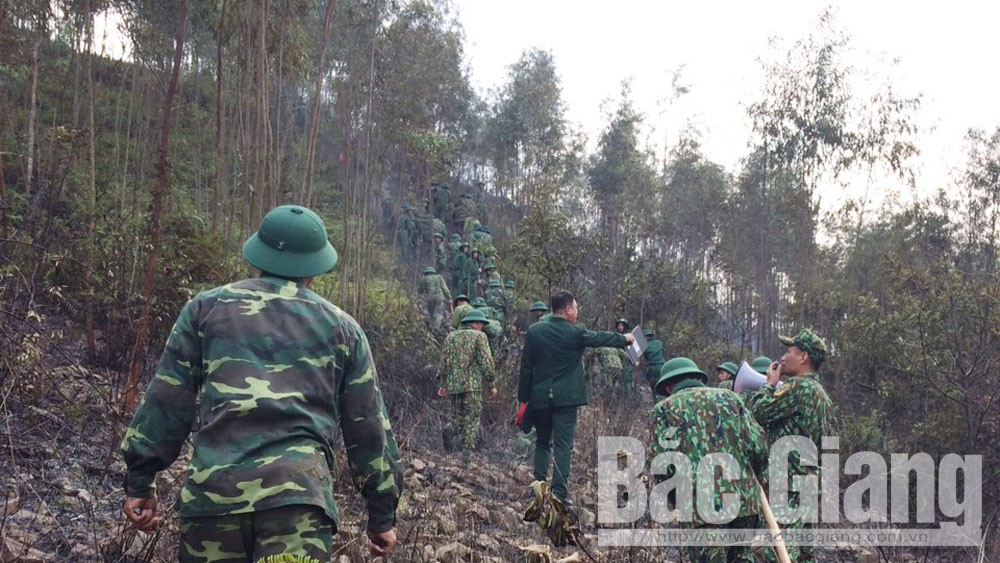 Cháy khoảng 2ha rừng tại xã Tiên Hưng (Lục Nam)