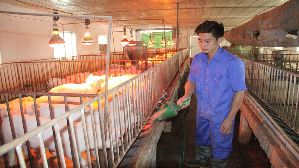 Lan tỏa phong trào nông dân sản xuất kinh doanh giỏi