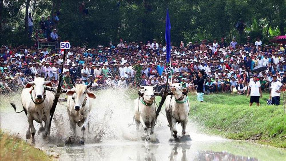 Nâng Hội đua bò Bảy Núi lên tầm quốc tế