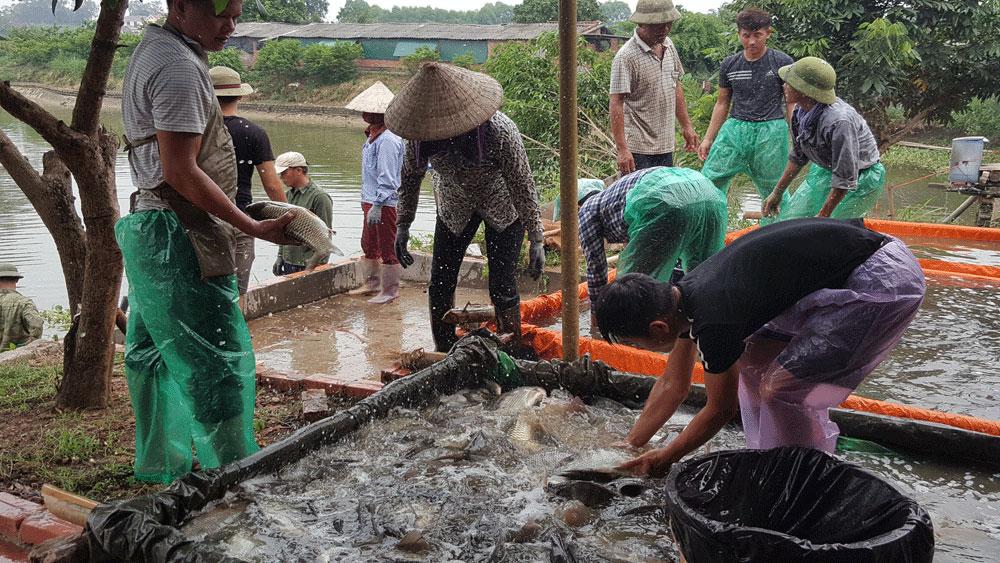 Quỹ hỗ trợ nông dân huyện Lạng Giang (Bắc Giang): Tiếp sức cho nhiều mô hình kinh tế