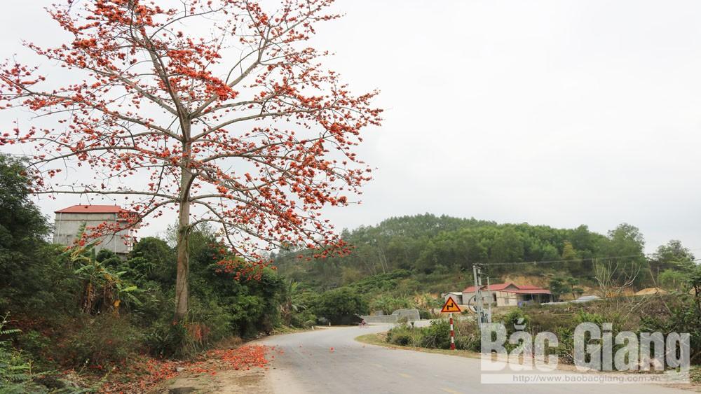 Mùa hoa gạo ở Tân Sơn