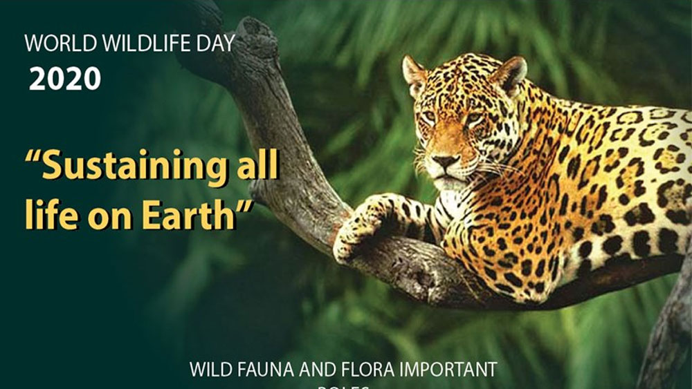 World Wildlife Day 2020 highlights the importance of biodiversity