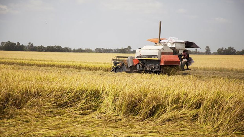 Vietnam's rice exports increase 27 percent in first two months of 2020