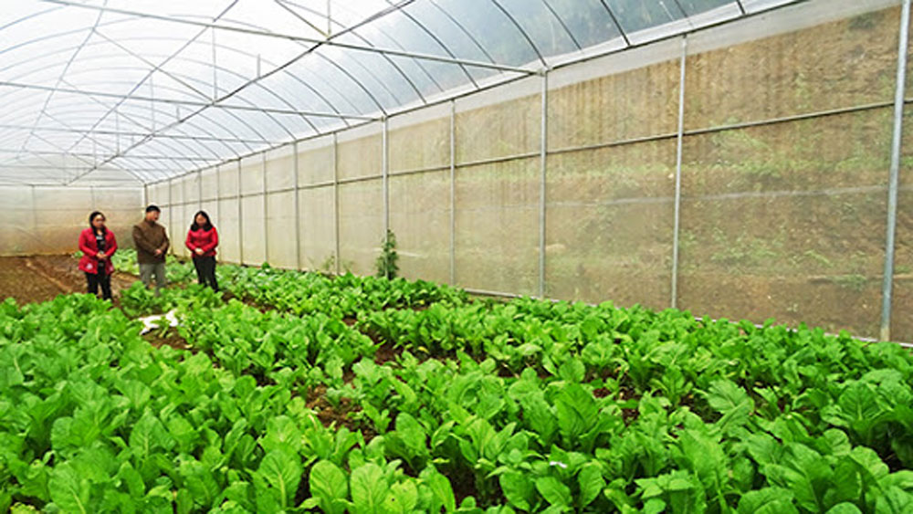 Bac Giang agriculture makes changes for integration