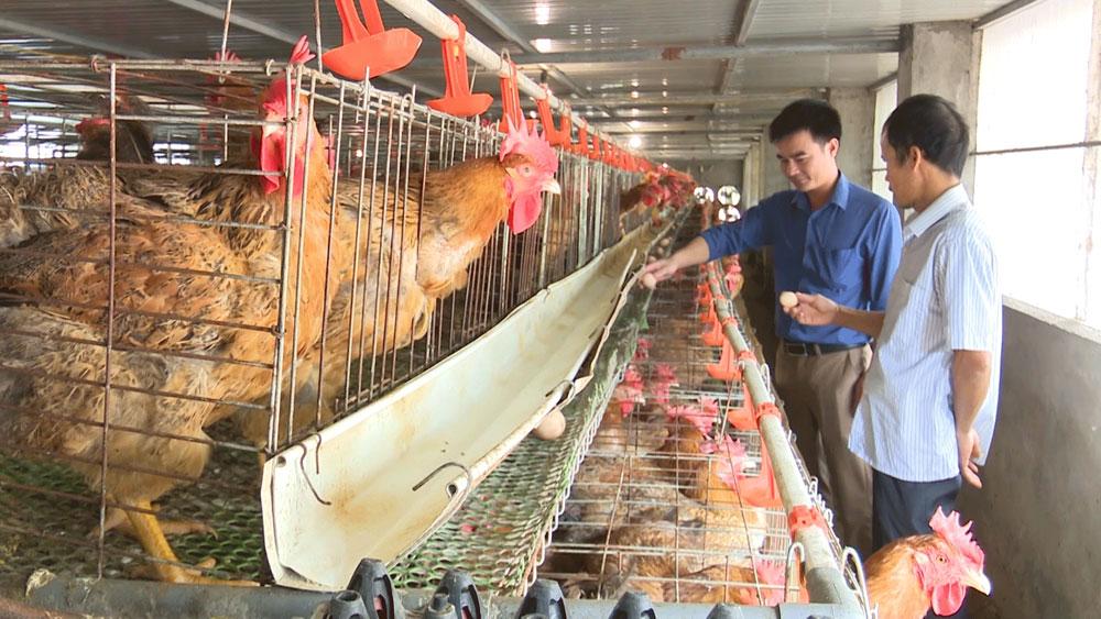 Bắc Giang: Chủ động giống, nâng chất lượng gà thương phẩm