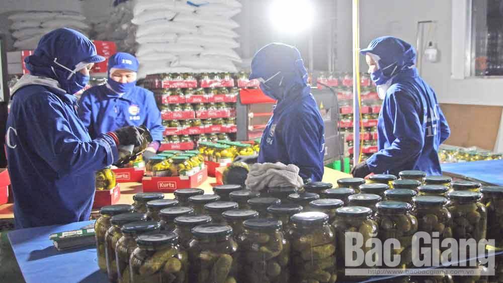 Chế biến dưa bao tử tại Công ty cổ phần Chế biến thực phẩm xuất khẩu G.O.C.