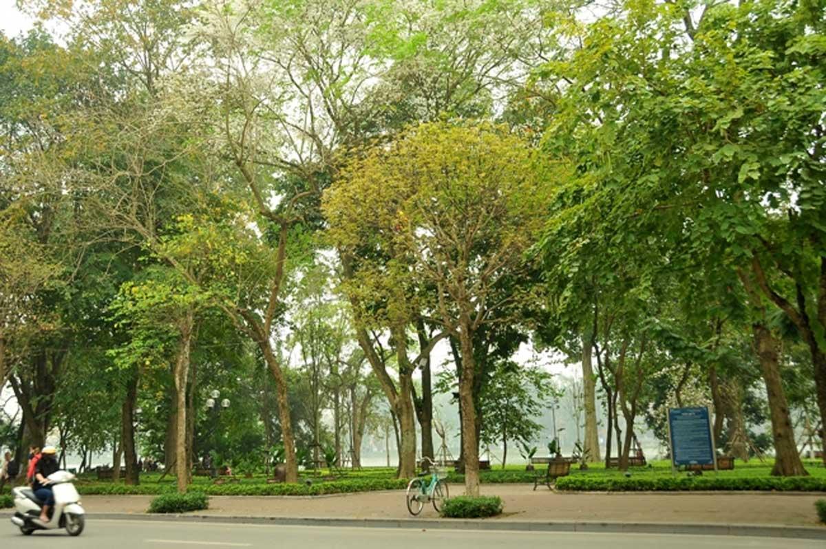 Hà Nội, mùa cây thay lá, chống dịch Covid - 19, hình ảnh ấm áp, sắc vàng đỏ
