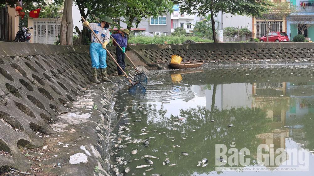 TP Bắc Giang, Cá chết hàng loạt, ở hồ Đầm Sen, gây ô nhiễm môi trường, nước thải