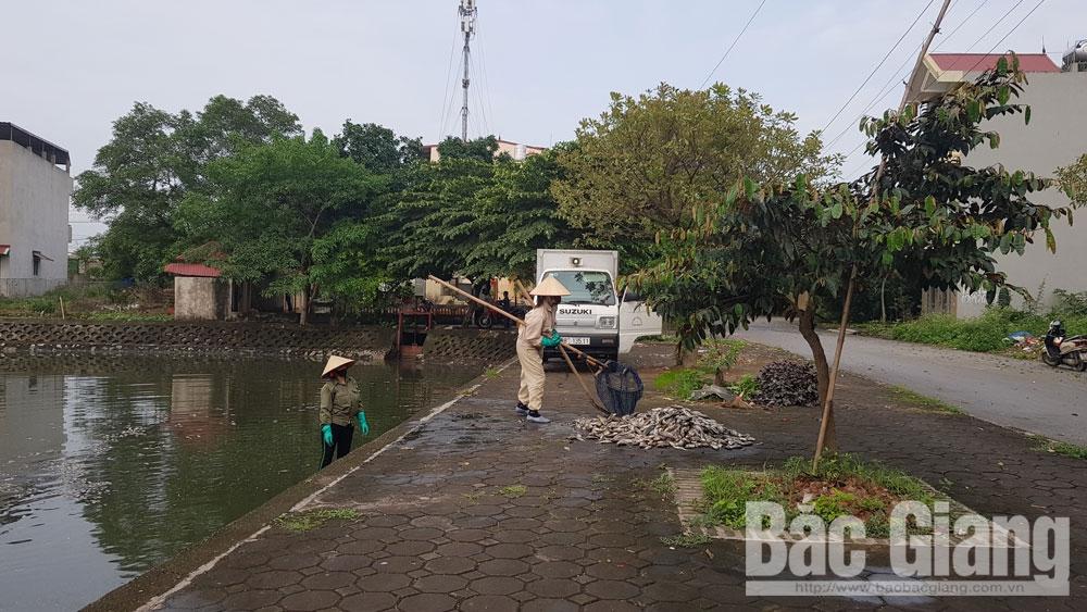 Nhiều ao, hồ ở TP Bắc Giang ô nhiễm nghiêm trọng