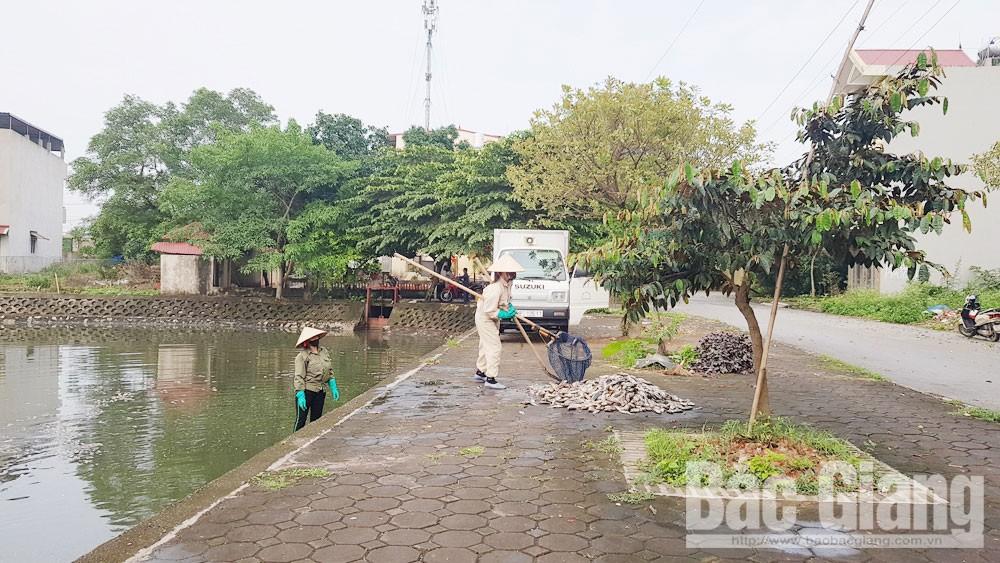 ao hồ ô nhiễm, Bắc Giang,