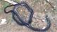 Người đàn ông bị rắn hổ chúa dài 2,6m cắn tử vong