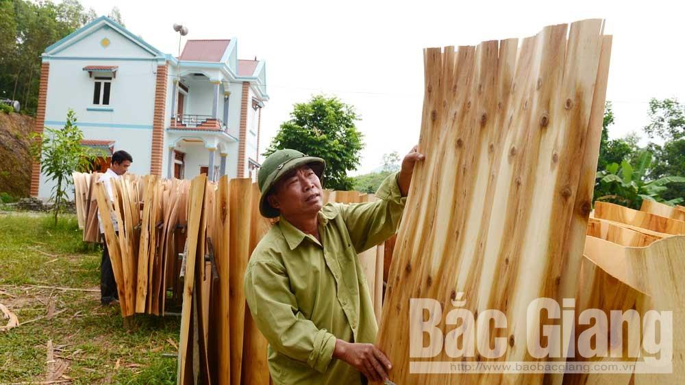 Bắc Giang, gỗ, giá gỗ, gỗ nguyên liệu