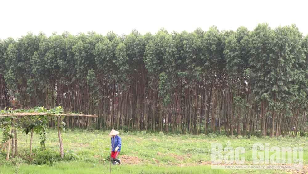 Ngăn chặn hành vi trồng cây lâu năm trên đất nông nghiệp để trục lợi