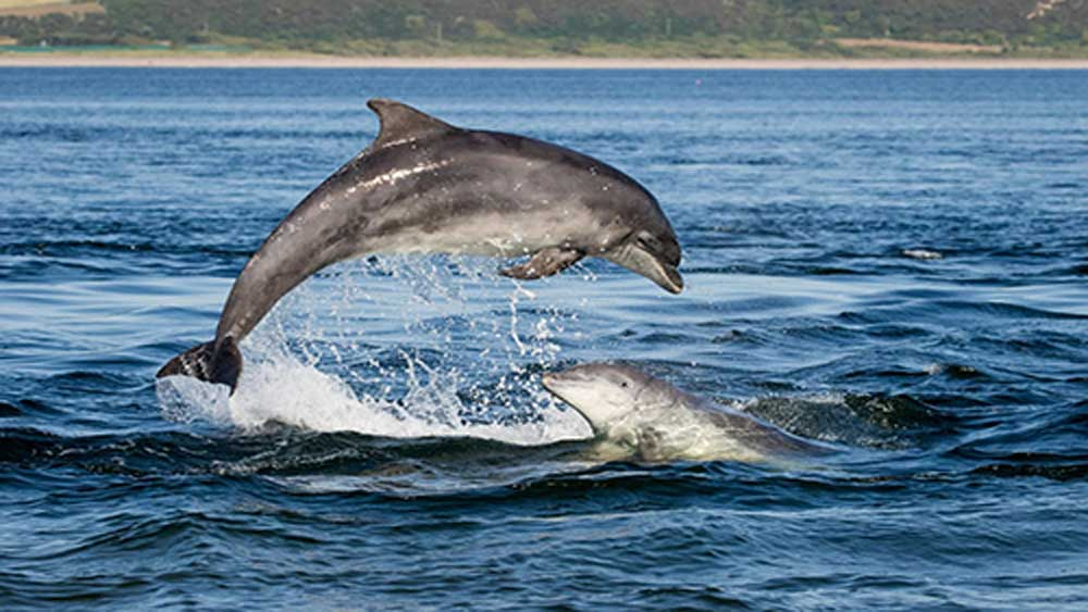 Dolphins put in a surprise appearance off central coast