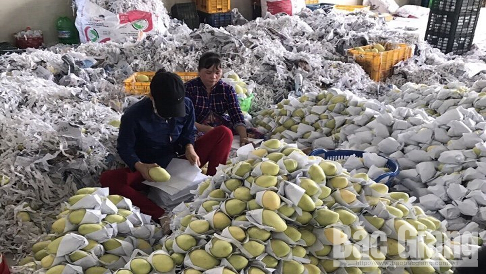 Bac Giang develops domestic market to limit damage for farm produce