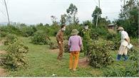 Lục Nam: Hàng chục cây vải thiều của hộ dân bị kẻ xấu chặt hạ