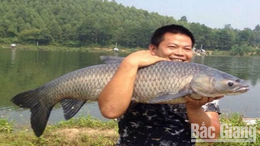"""""""King of the fish"""" in Ngac Hai lake"""