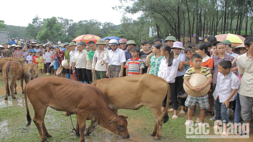 """Cow bank"" - A meaningful livelihood gift"