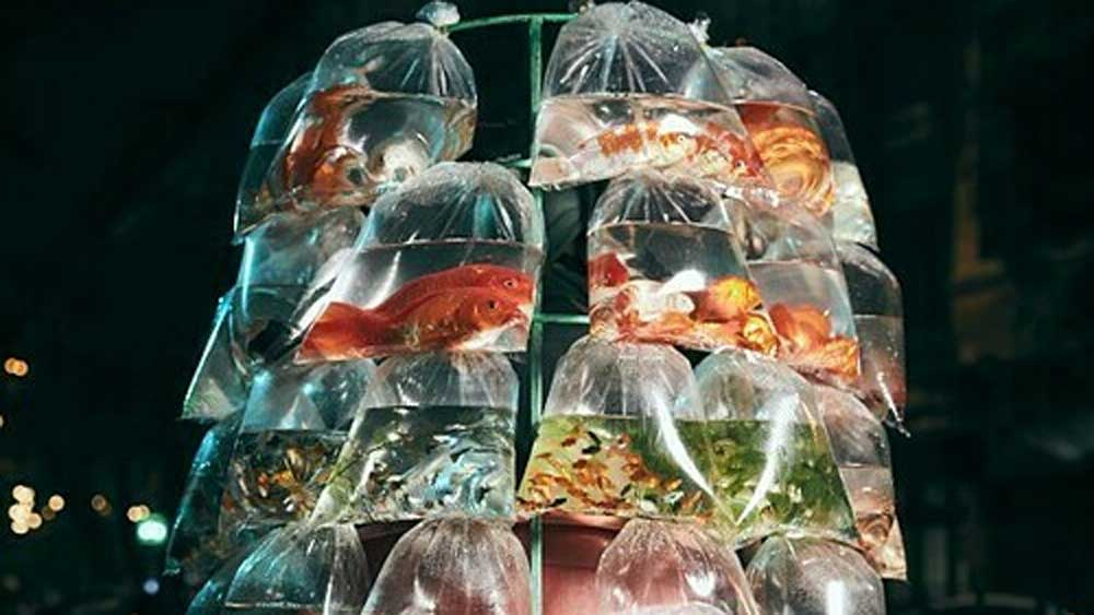 Vietnam ornamental fish seller photo wins grand Smithsonian prize