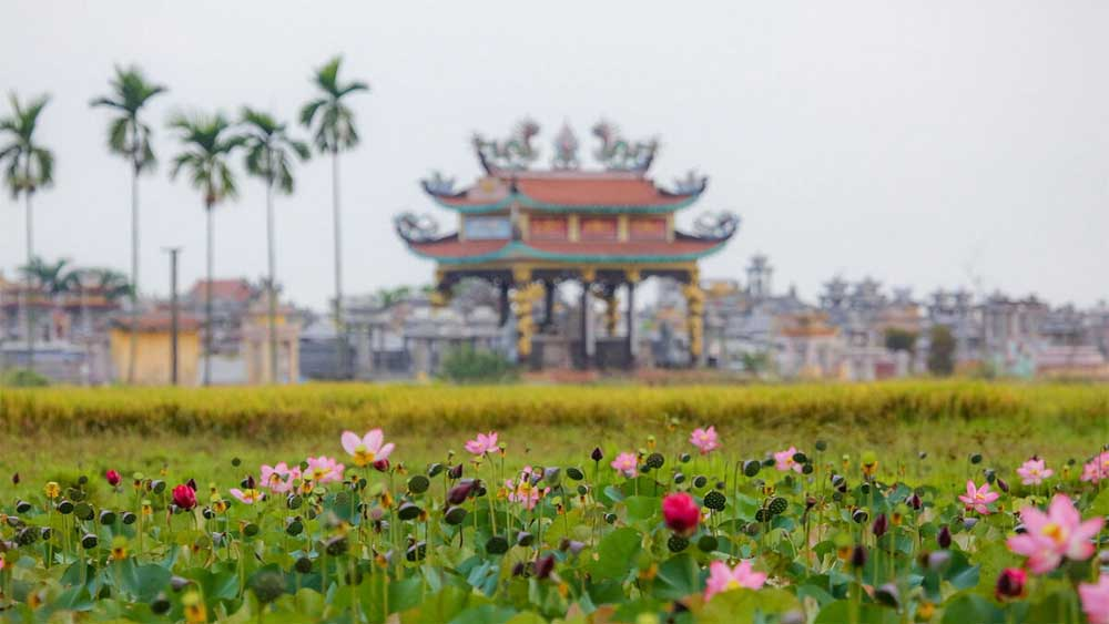 It's photo op time as lotuses bloom in central Vietnam