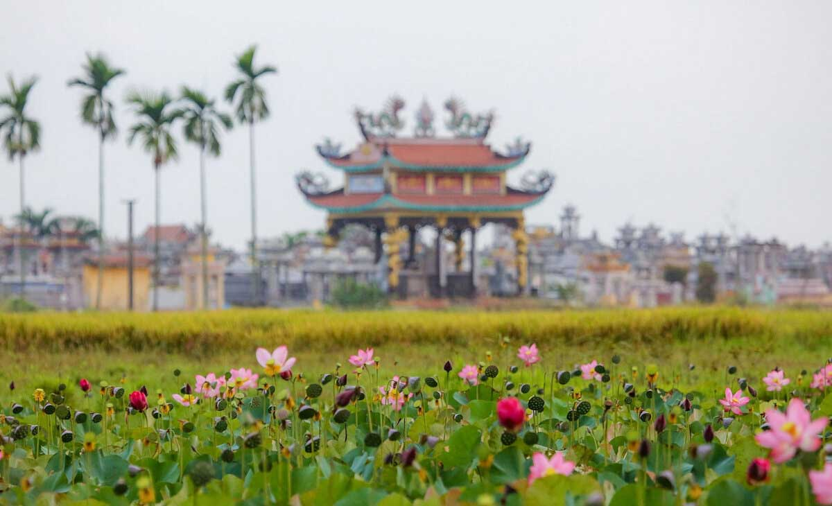 Photo op time, lotuses bloom,  central Vietnam, fragrance and beauty, lotus flowers, rustic charm, Quang Nam province