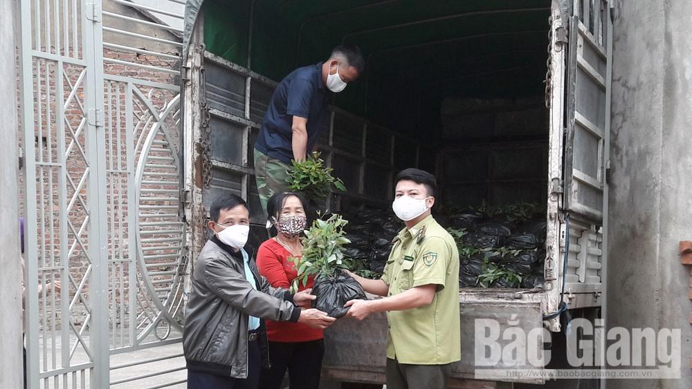 Yên Dũng: Hơn 300.000 cây giống được bàn giao cho các hộ dân
