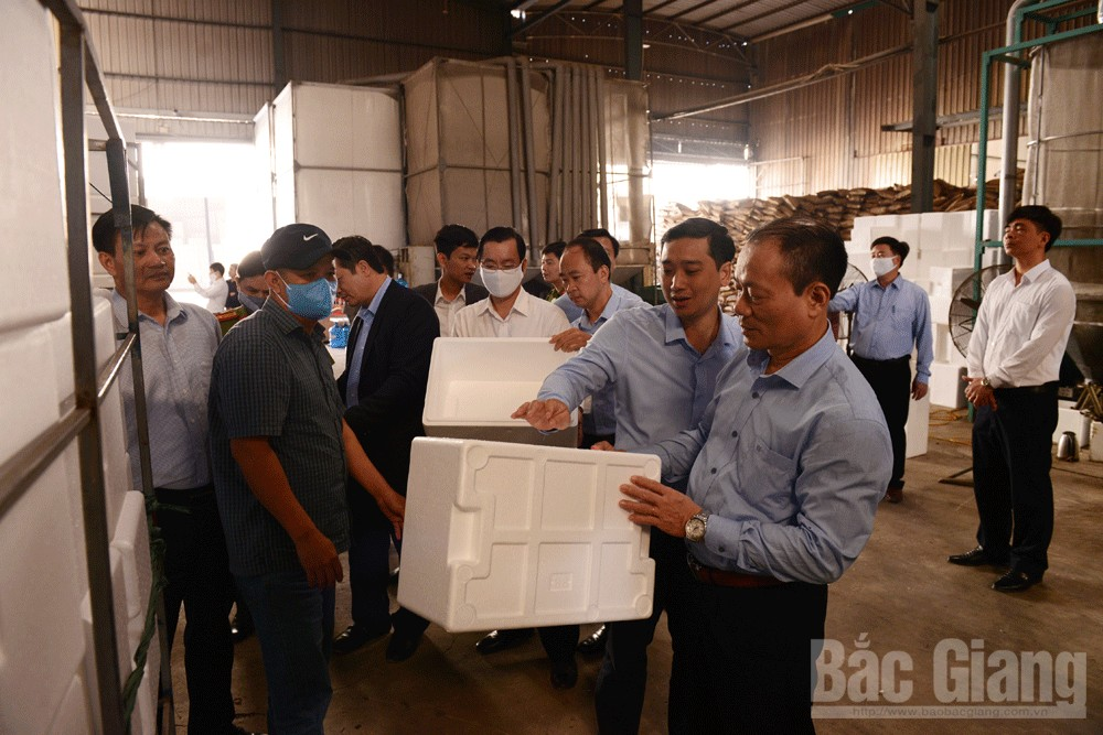 Bac Giang ensures smooth lychee production and consumption