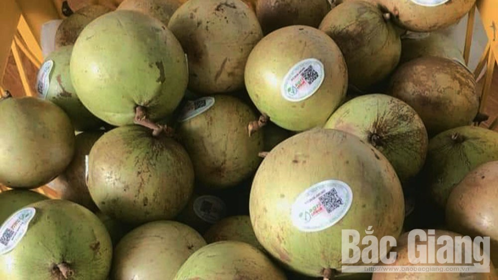 Hop Duc star apple fruit, good selling price, limited source of supply, Bac Giang province,  affirmed quality and appearance, stable high price, juicy and delicious fruit