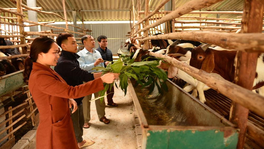 Hội Nông dân huyện Tân Yên: Tạo động lực cho hội viên phát triển sản xuất