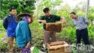 Yên Thế: Nhân rộng mô hình nuôi ong VietGAHP