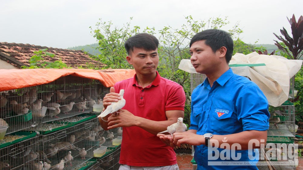 Startup stories, Bac Giang province,  village of guest workers, huge wage of working abroad, Covid-19 pandemic,  Economic Youth Club, high economic value