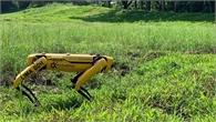 Singapore triển khai chó robot giám sát giãn cách xã hội