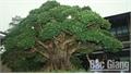 Độc lạ cây cảnh Neo Garden