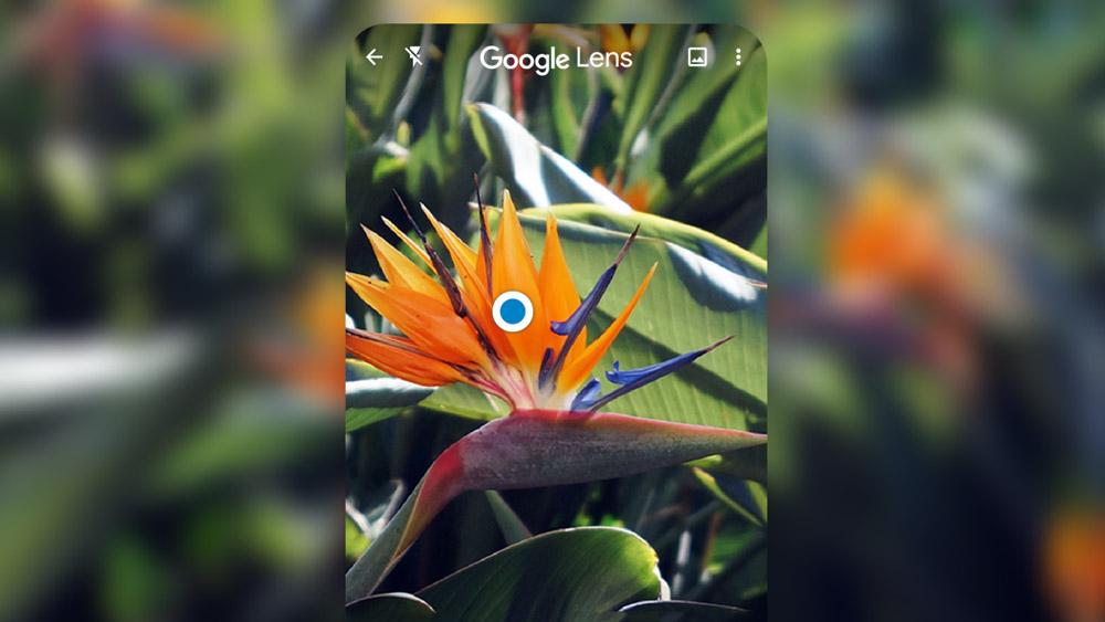 Google ống kính, google lens, dịch bằng google lens, tìm hiểu đồ vật qua camera