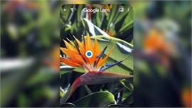 'Mắt thần điện tử' Google: Trợ thủ đắc lực cho học sinh soạn đề cương mùa thi
