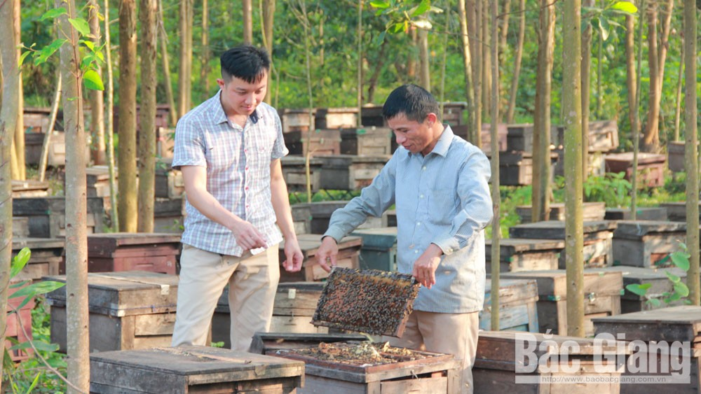 Developing agricultural products, Son Dong highland, Bac Giang province, climate and soil,  typical agricultural products, production models, high economic efficiency, socio-economic development, effective production models